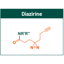 Diazirine fragments